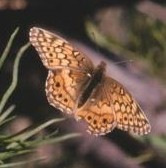 Old Butterfly Photo