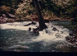 Frame 41