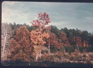 Frame 61